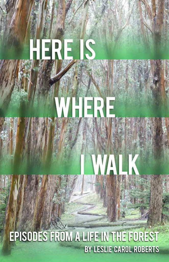 Here Is Where I Walk book cover