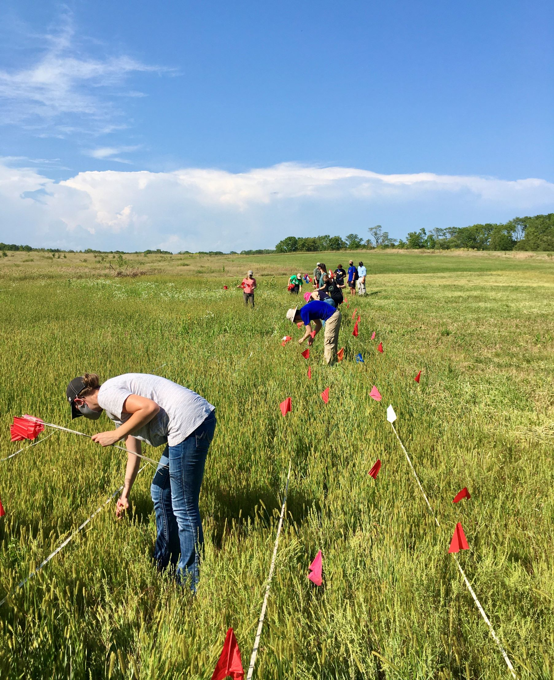 Ashton Prairie Restoration