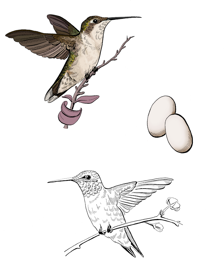 Egghead Ruby Throated Hummingbird